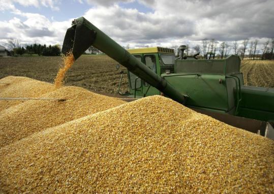 Экспорт зерна из РФ в
