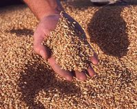 Продажи зерна из