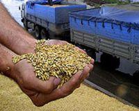 Урожай зерна на Украине