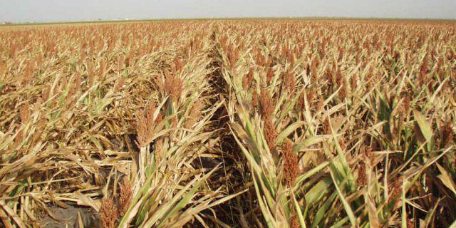 Росгидромет: урожай