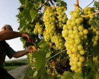 Производство вин в