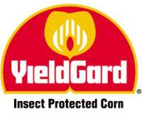 ГМО теряет устойчивость