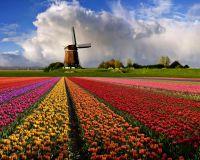 Нидерланды увеличили