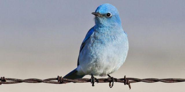 Twitter получил патент в