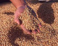 Росстат: запасы зерна в