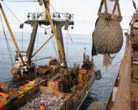 Добывать рыбу в водах РФ