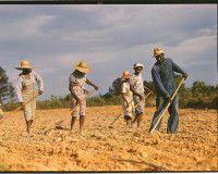 Африку спасет