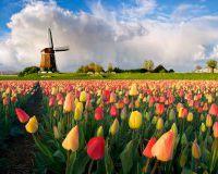 Голландия сократила