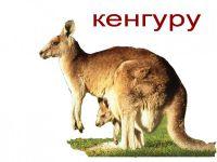 Австралия: некоторые