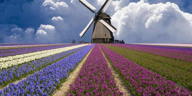 Нидерландские экспортеры