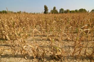 Минсельхоз: засуха может