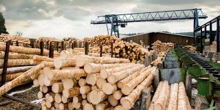 Китайская AVIC Forestry