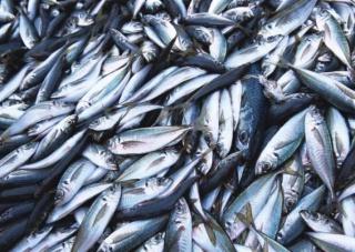 Росрыболовство: рыба все