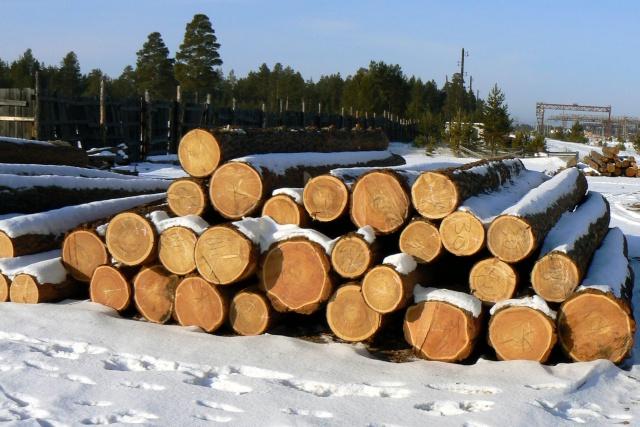 Банк образцов древесины