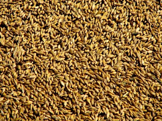Цены на зерно на Урале и