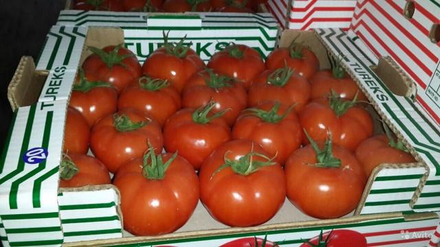 РСХН: турецкие помидоры