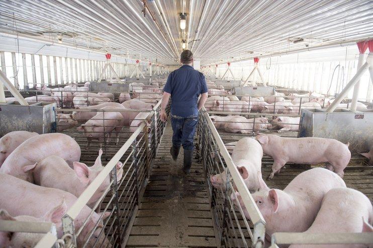 Американской свинине