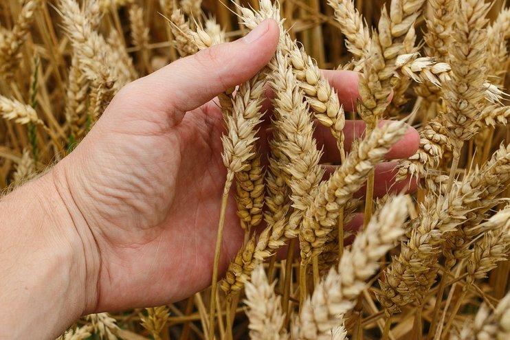 Зерновой союз ожидает